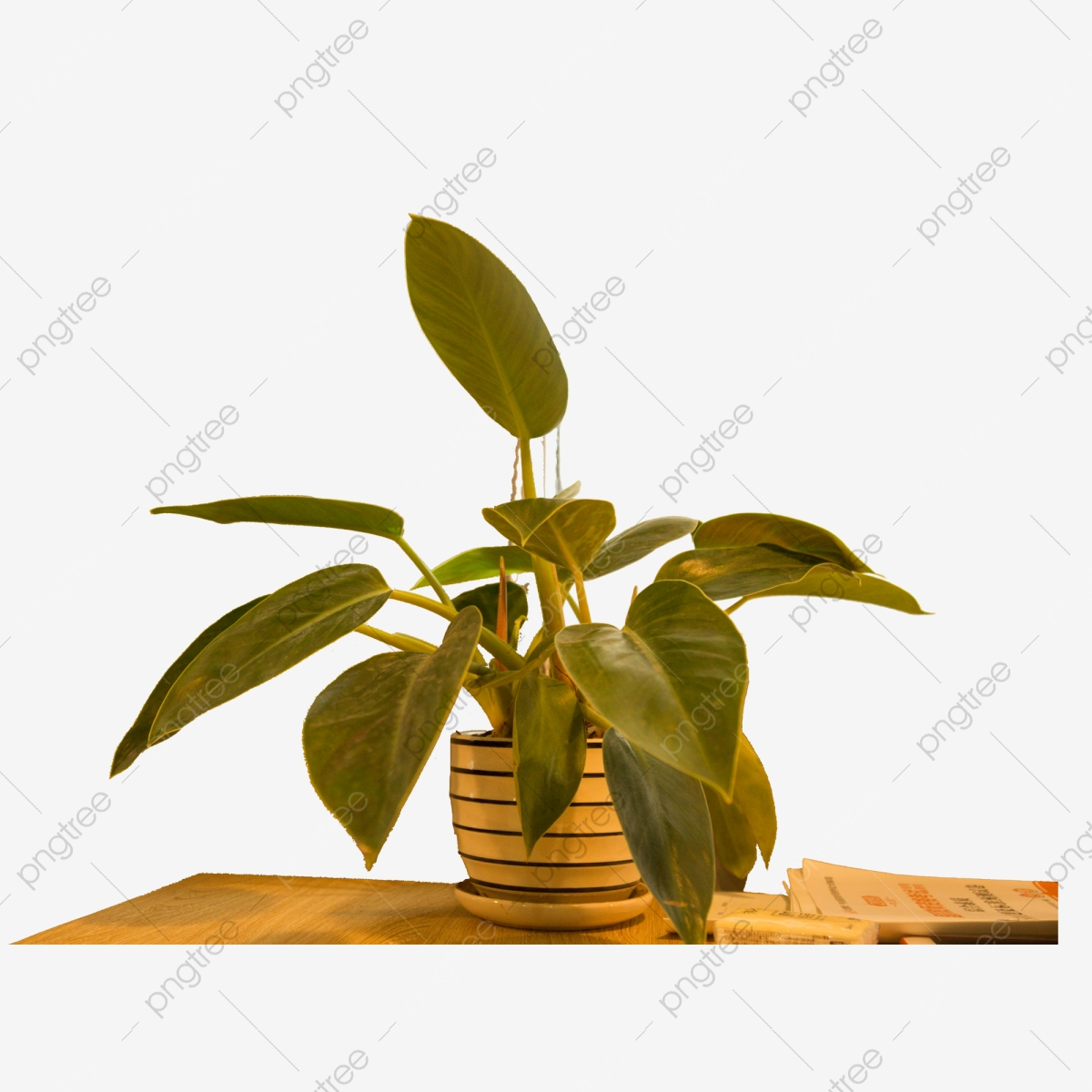 A Pot Of Potted Plants On The Table Potted Plants Plants Nature Png Transparent Clipart Image And Psd File For Free Download