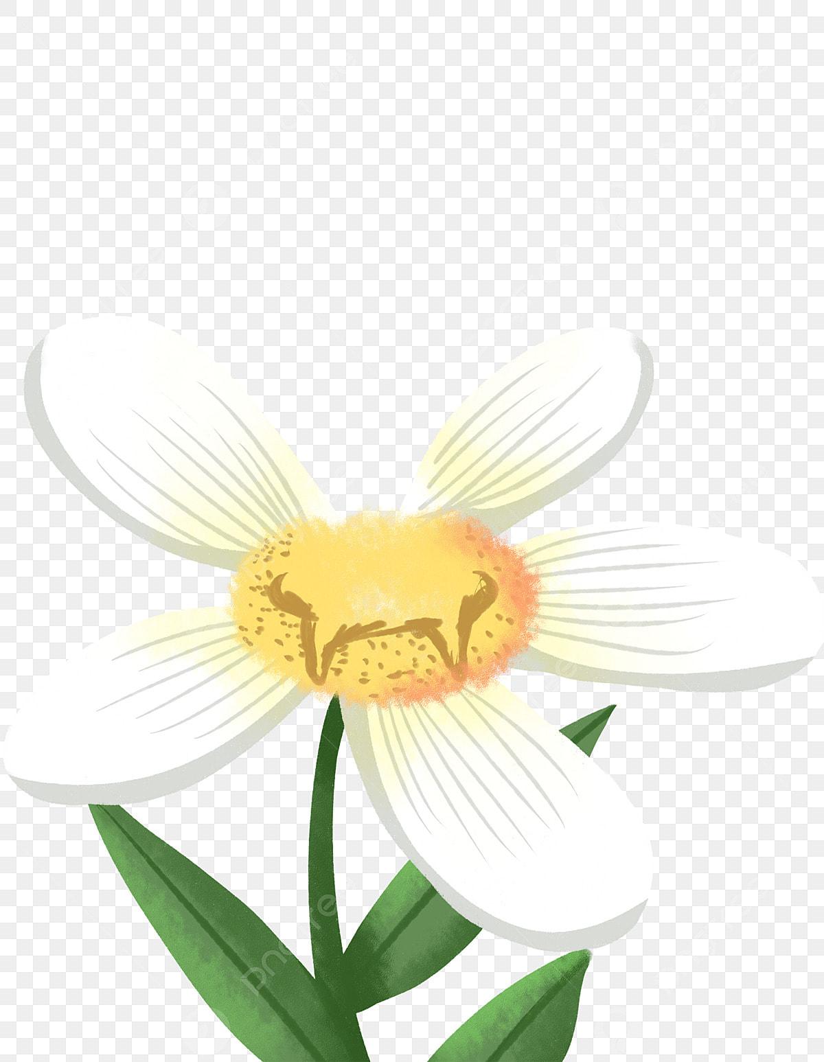 دوار الشمس أسس اليد المرسومة تصوير أبيض أخضر عباد الشمس الأبيض دوار الشمس نبات مرسومة باليد Png وملف Psd للتحميل مجانا