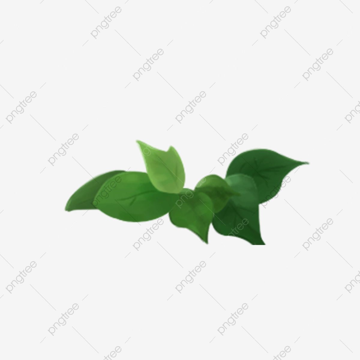 Cartoon Green Tea Leaf Download Cartoon Tea Leaves Green Leaves Cartoon Green Leaves Png Transparent Clipart Image And Psd File For Free Download