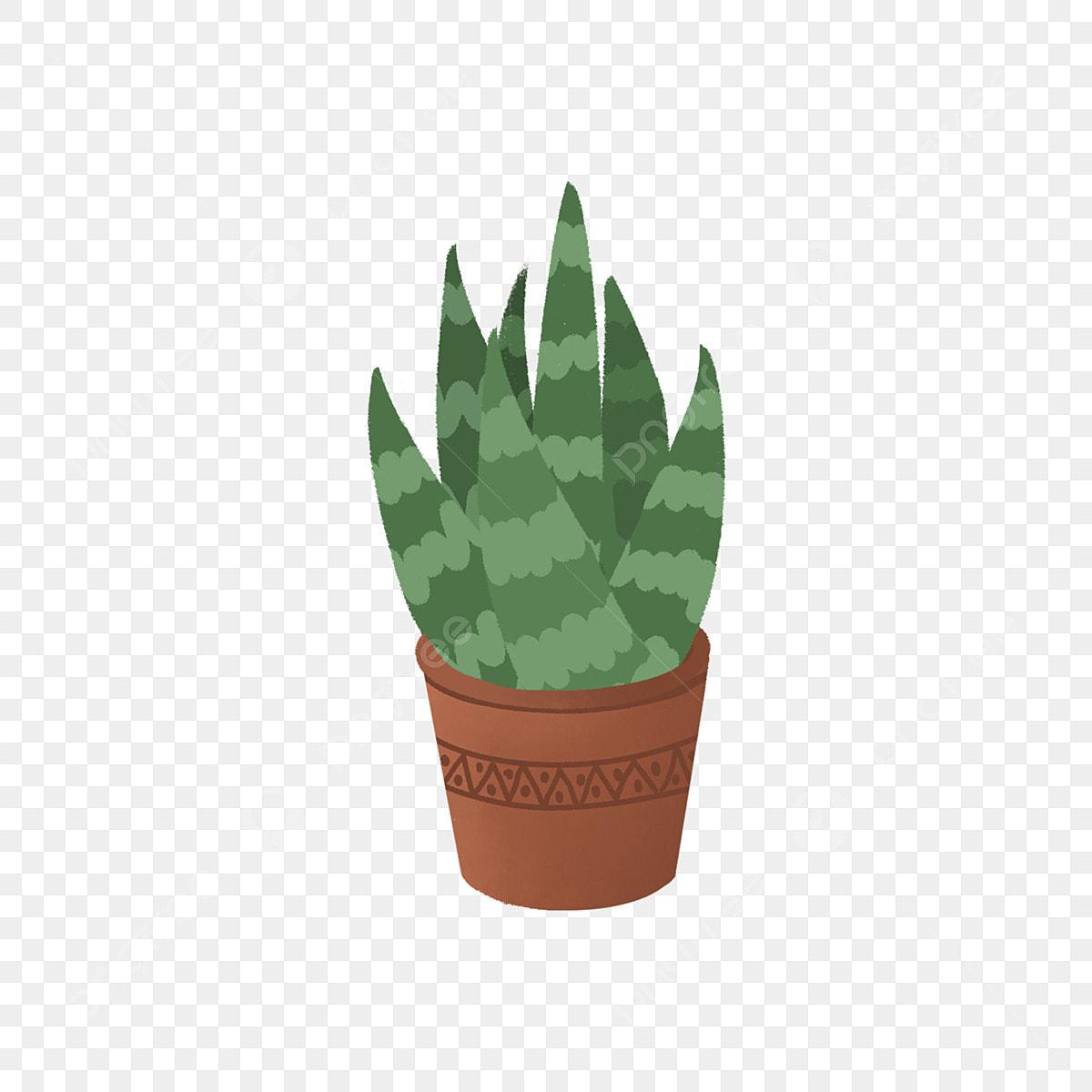 Dessin Animé D Aloe Vera Aloe Vera Plantes En Pot Plantes