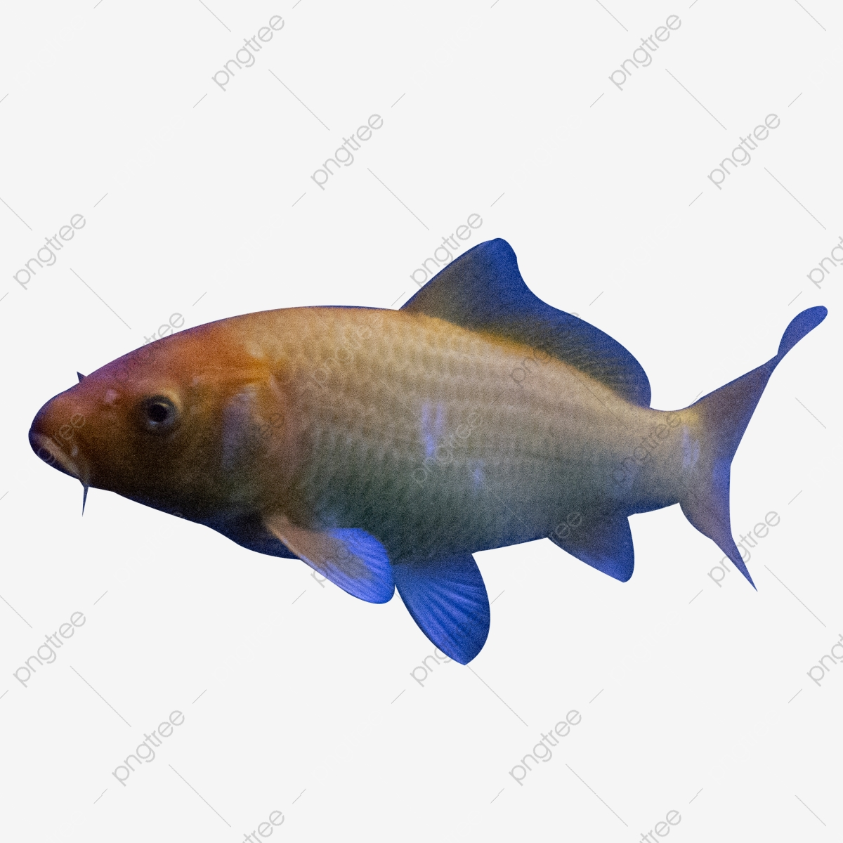 Fish Png Images Vector And Psd Files Free Download On Pngtree Discover 5426 free fish png images with transparent backgrounds. https pngtree com freepng ornamental fish 4483447 html