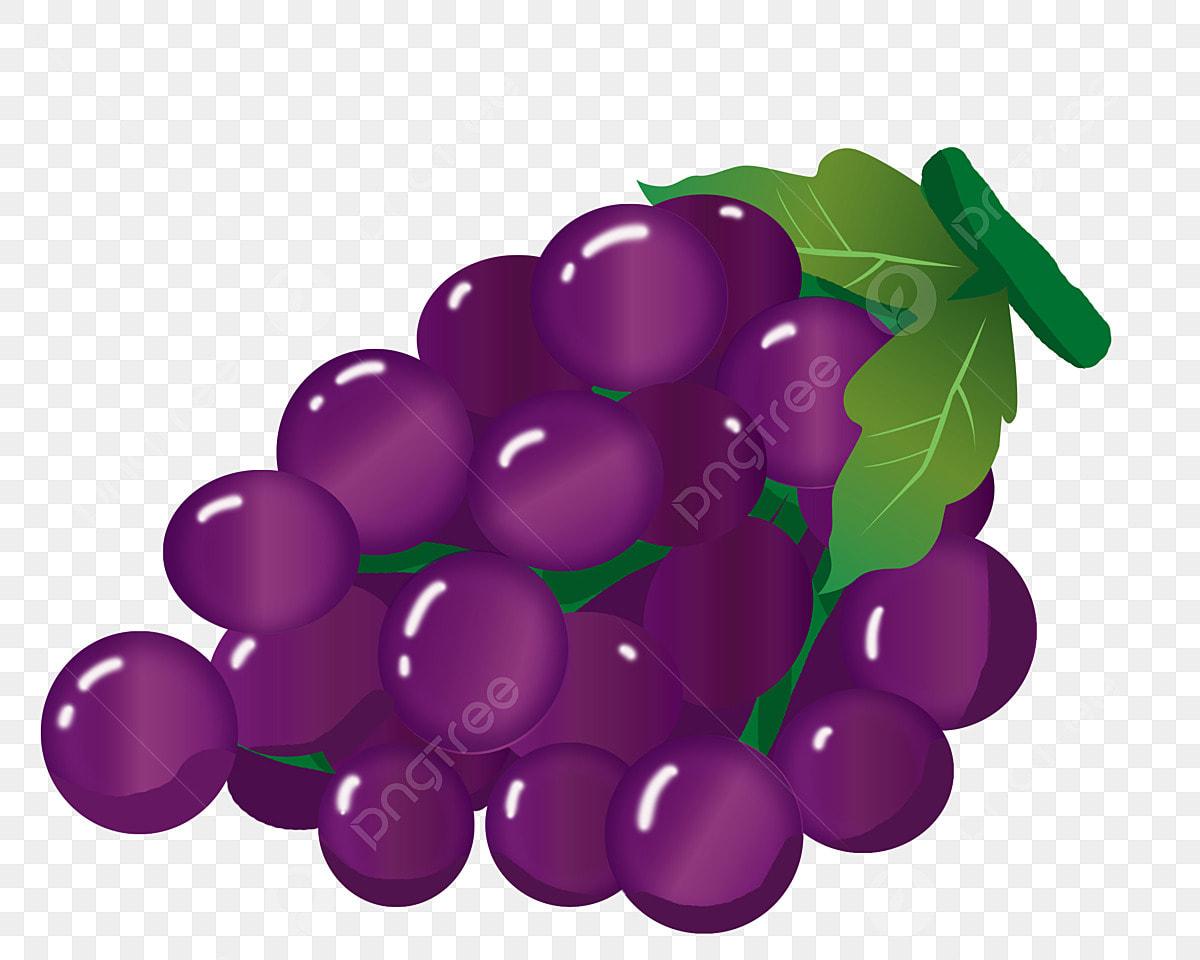 81+ Gambar Animasi Anggur Merah Paling Hist
