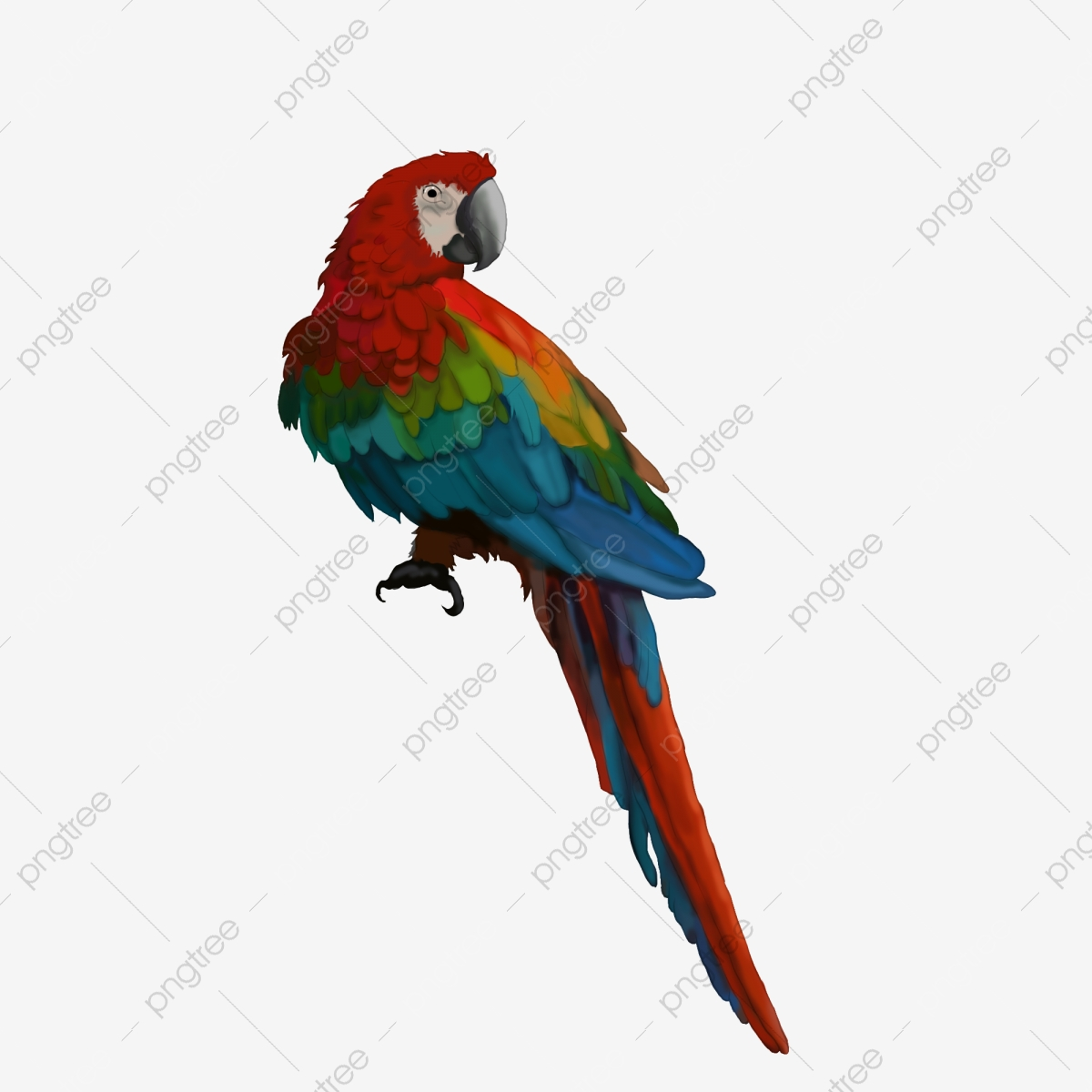 الببغاء اللون الببغاء الحيوان الطيور الببغاء Clipart ببغاء ببغاء ملون Png وملف Psd للتحميل مجانا