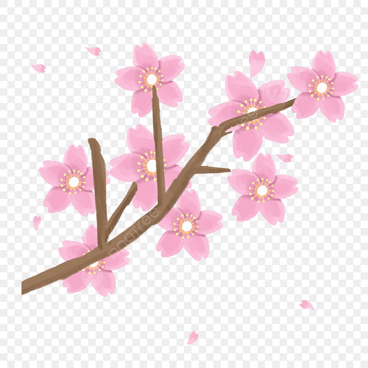 Sakura Fleurs Sur Les Branches Fleurs De Cerisier Dessins Animes Belle Telecharger Ppt Branches Fichier Png Et Psd Pour Le Telechargement Libre