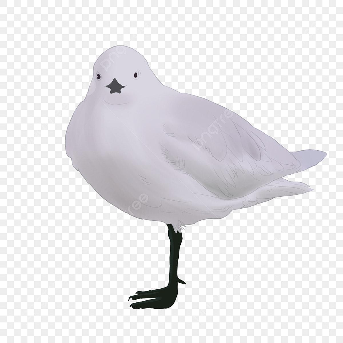 Berdiri Camar Camar Burung Haiwan Praktikal Seagull