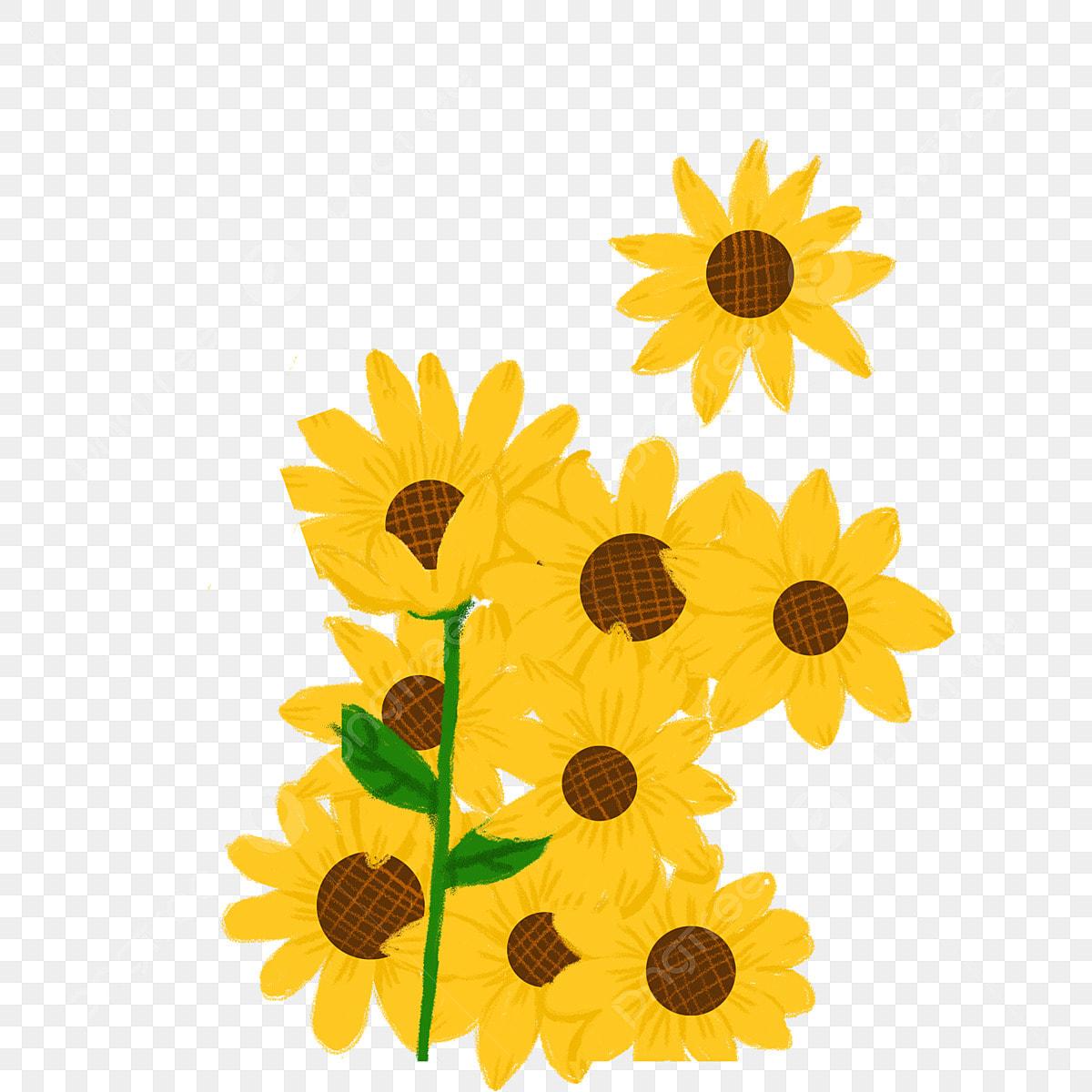 Gambar Bunga Kuning Bunga Bunga Bunga Matahari Ilustrasi Kartun Png Transparan Clipart Dan File Psd Untuk Unduh Gratis