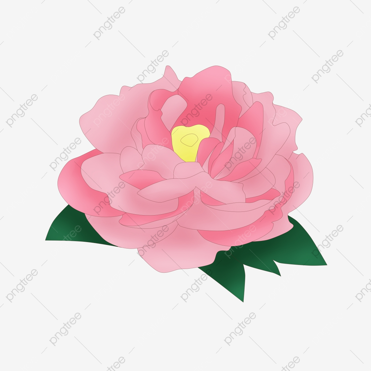 Blooming Cartoon Peony Flower Pink Peony Cartoon Botanical Illustration Beautiful Flowers Png Transparent Clipart Image And Psd File For Free Download