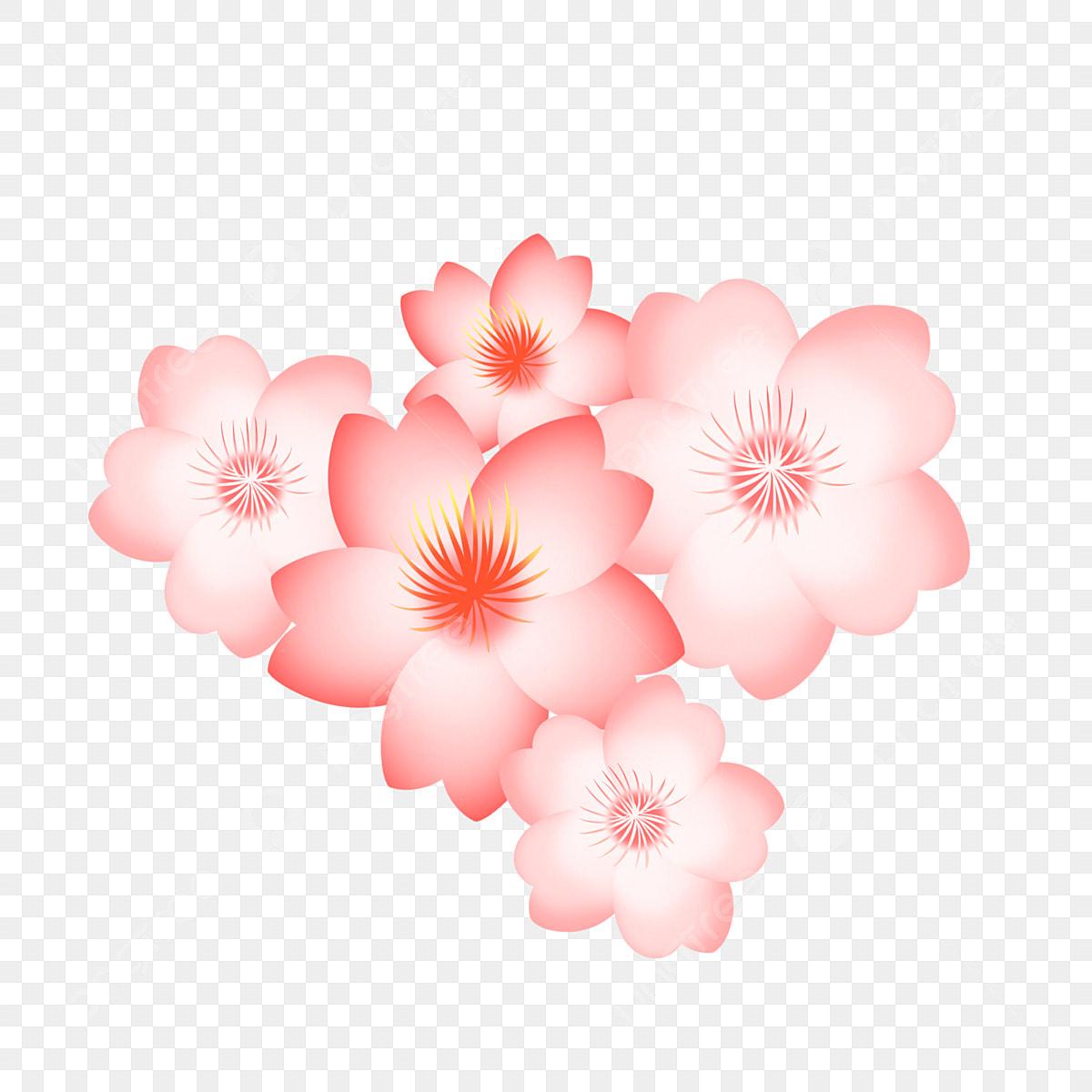 Illustration De Belle Fleur De Cerisier Rose Clipart Fleur De Cerisier Belle Illustration De Fleur De Cerisier Fleur De Cerisier Rose Fichier Png Et Psd Pour Le Telechargement Libre