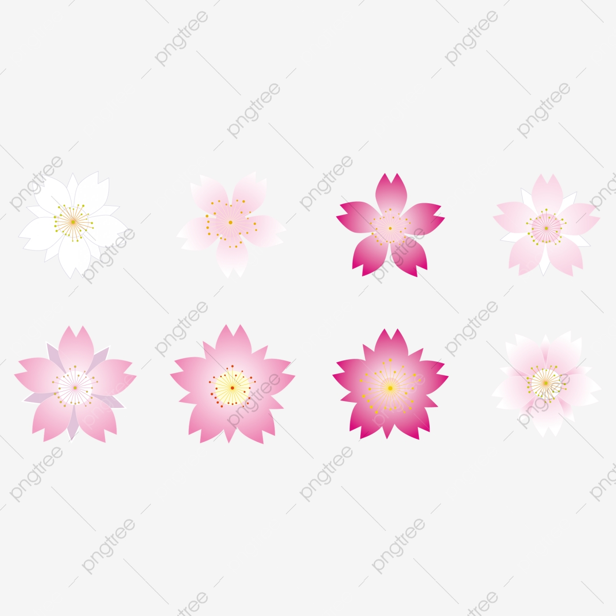 Pink Cherry Blossom Vector Cherry Blossom Cherry Blossom Vector Cherry Blossom Pink Png And Vector With Transparent Background For Free Download