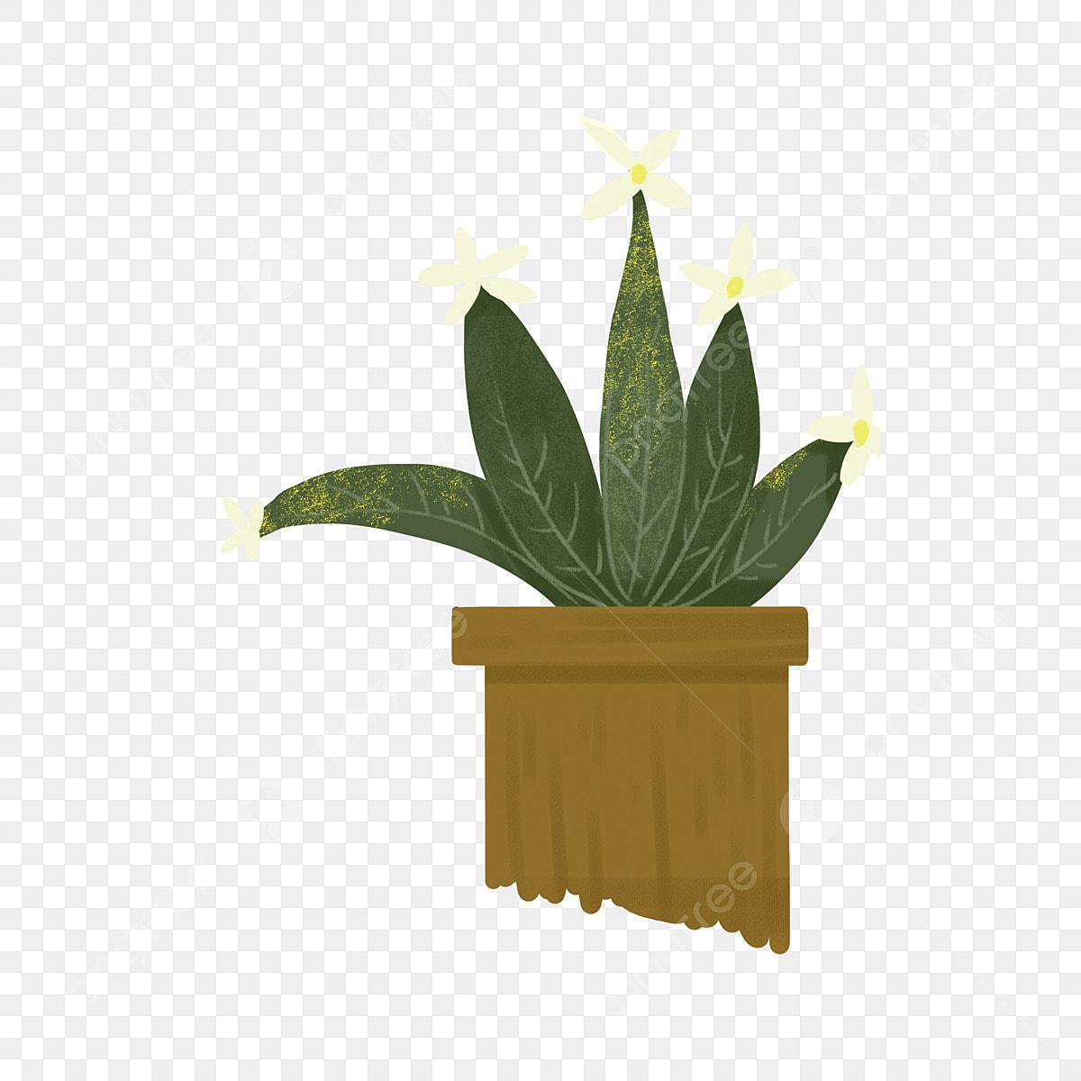 Pot Plante En Bois plantes en pot plantes fleurs fleurs blanches, en, pots de