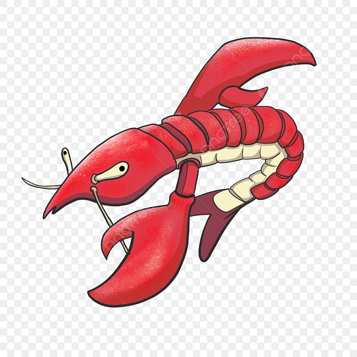 Lobster Melompat Udang Makanan Laut Segar Udang Merah Udang