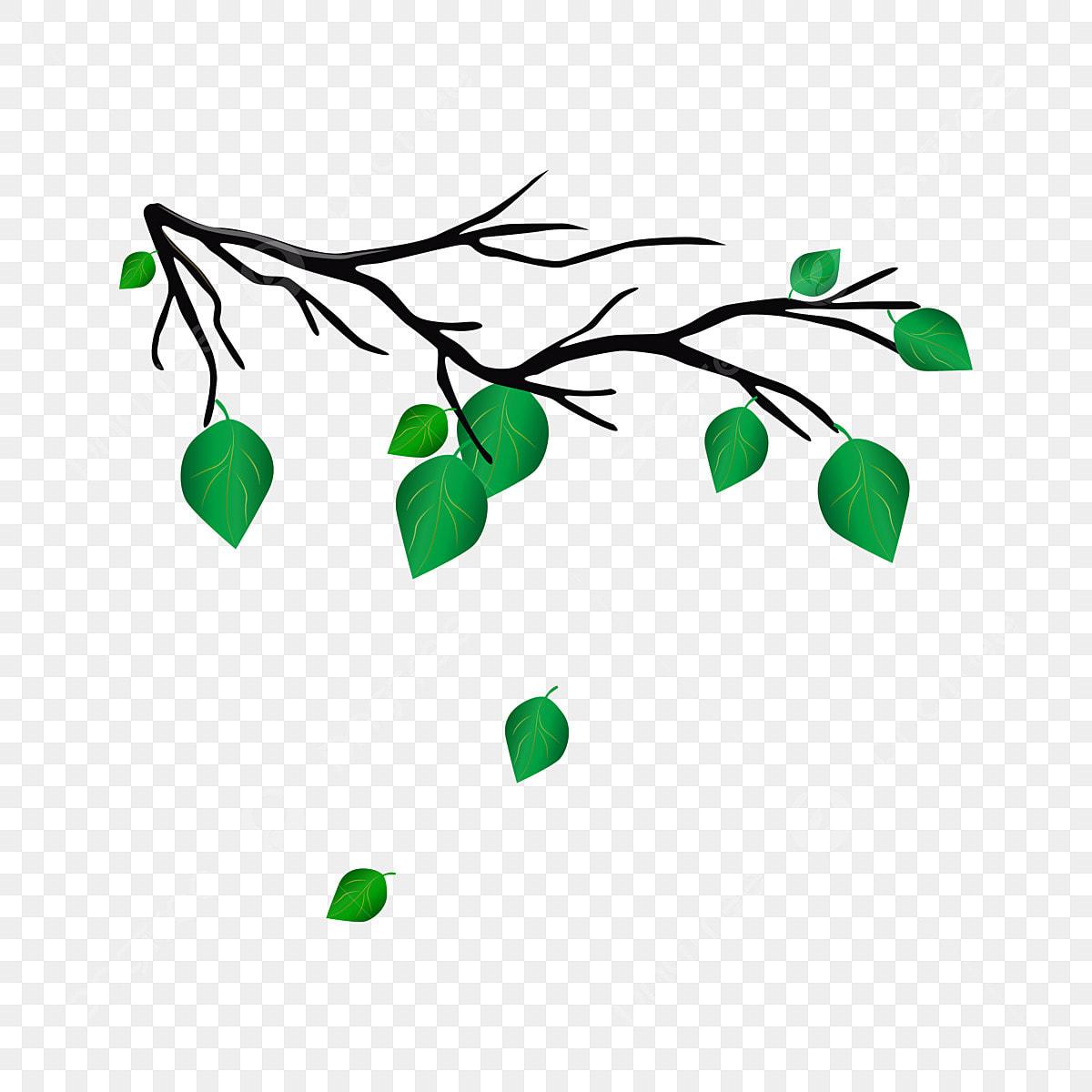 Gambar Pohon Anggur Rotan Keranjang Gantung Dedaunan Vektor Kartun Tanaman Anggur Png Dan Vektor Untuk Muat Turun Percuma