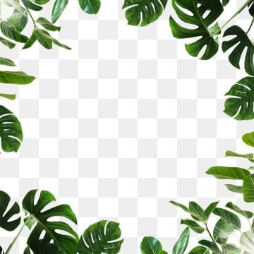 pngtree tropical leaf monstera green png image 1725338
