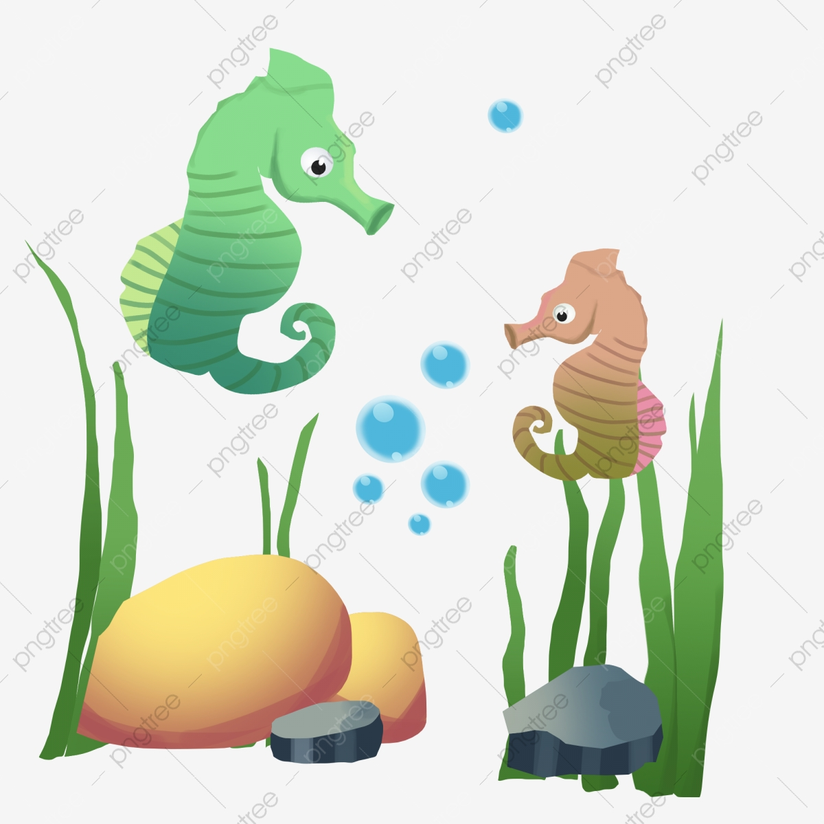 Hippocampus Rumpai Laut Buih Bintang Laut Laut Rumpai Laut