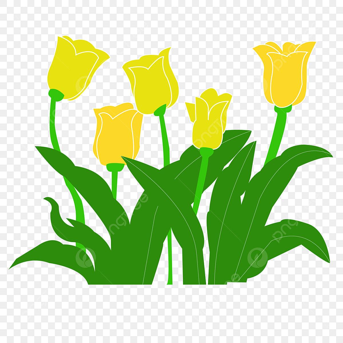Kartun Bunga Tulip Ilustrasi Percuma Bunga Tulip Kuning Kartun