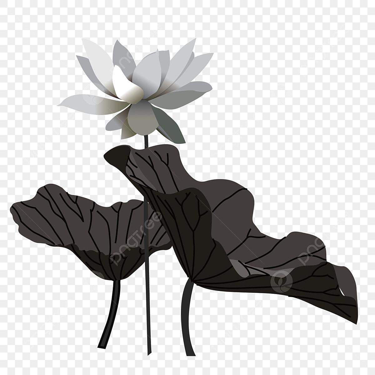 Lotus Dété Feuille De Lotus Feuille De Lotus Noir Lotus De