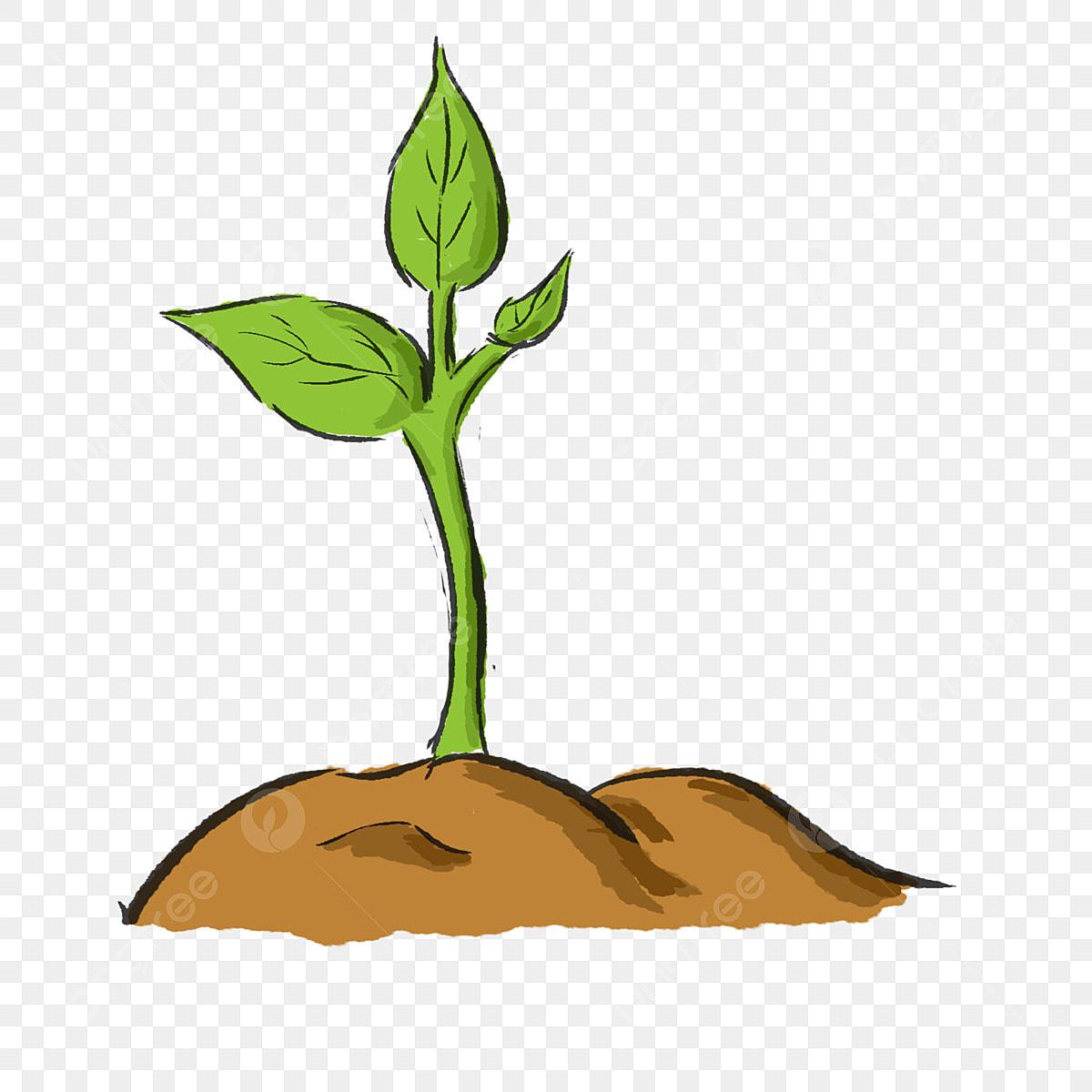 Croissance De Petites Plantes Plante écologique Verte Dessin