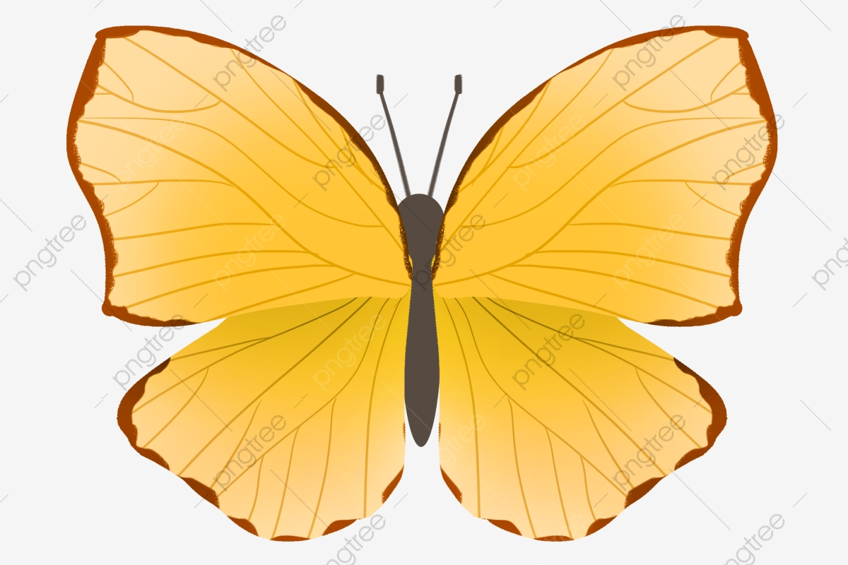 Minimalistic Yellow Butterfly Illustration Yellow Butterfly Spreading Wings Png Transparent Clipart Image And Psd File For Free Download