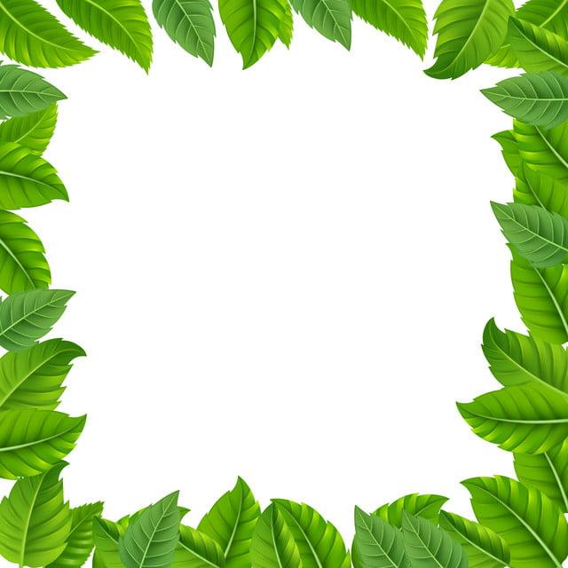 إطار الاستوائية ورقة الحدود الخضراء استوائي ورقة الشجر الحدود Png وملف Psd للتحميل مجانا