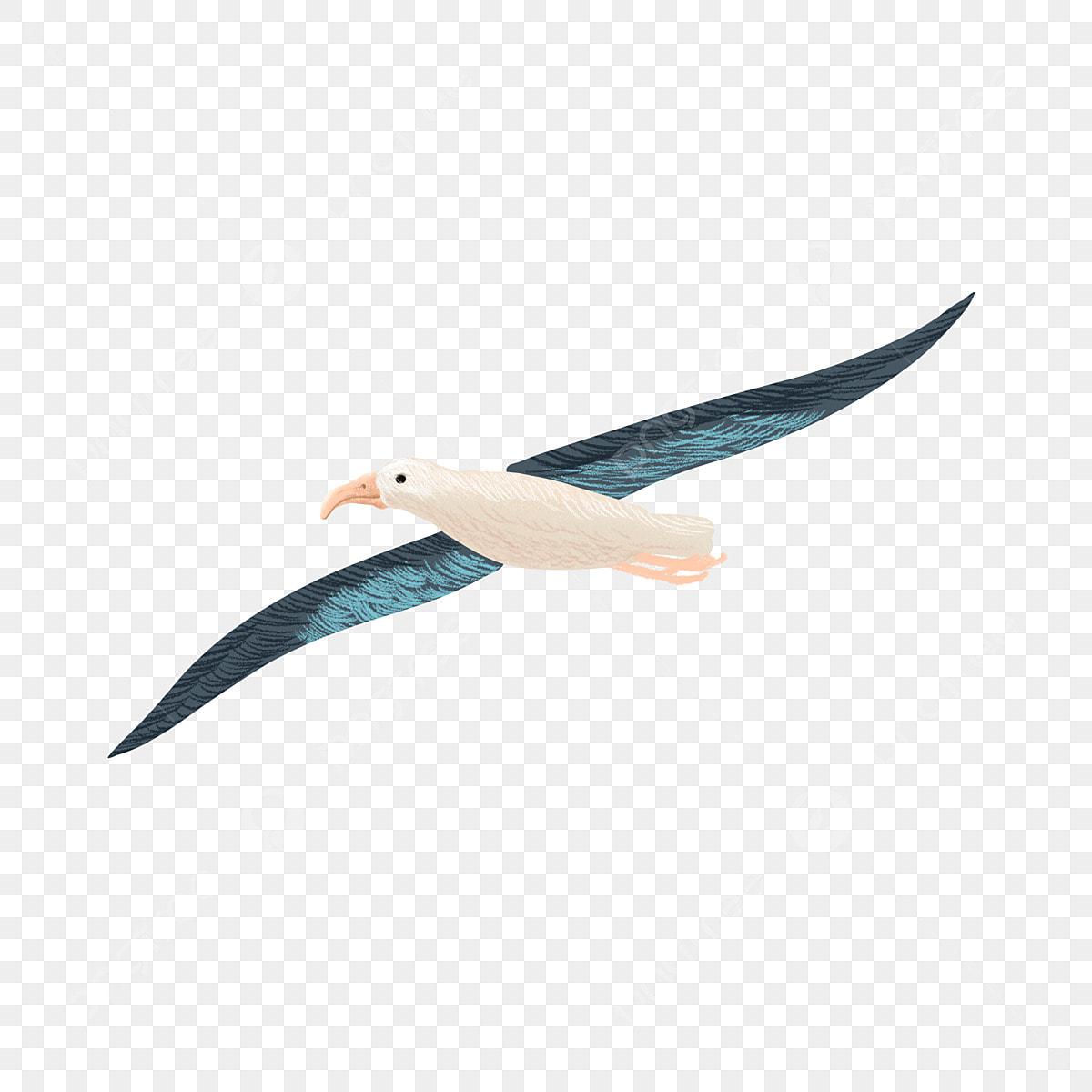 Burung Camar Melonjak Terbang Di Udara Gambar Udara Segar