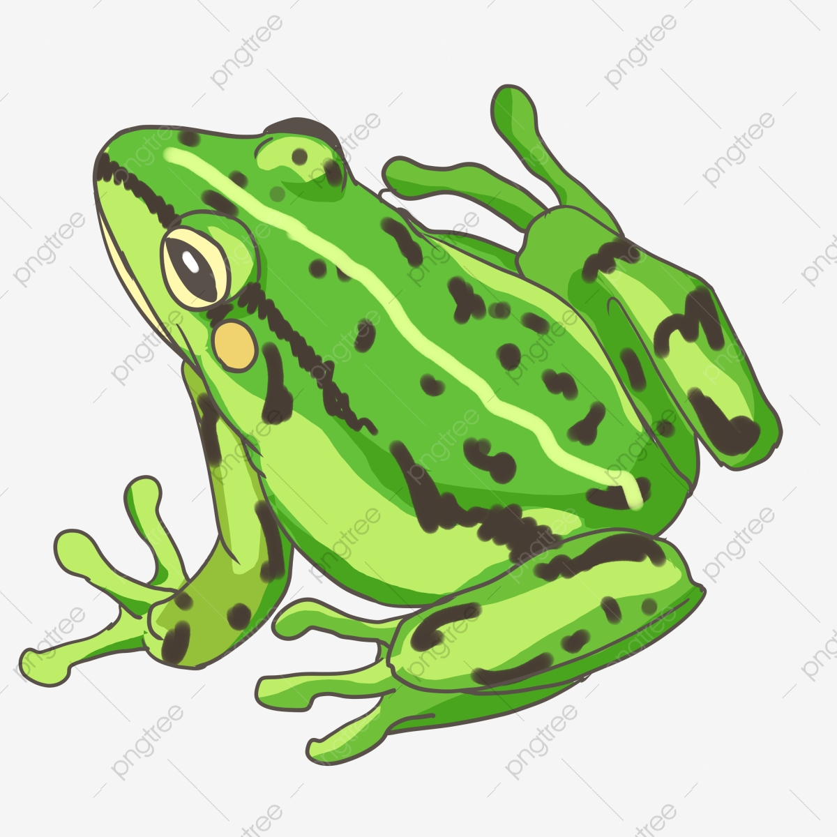 Amphibian Katak Hijau Katak Katak Katak Hijau Fail Png