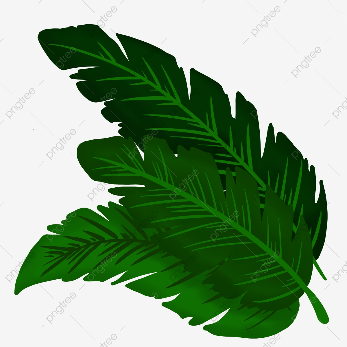 Tropical Rainforest Plant Leaves Summer Plants Green Leaves Png Transparent Clipart Image And Psd File For Free Download 115,000+ vectors, stock photos & psd files. https pngtree com freepng tropical rainforest plant leaves 4592639 html