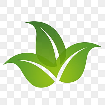 Green Leaf Png Images Vector And Psd Files Free Download On Pngtree