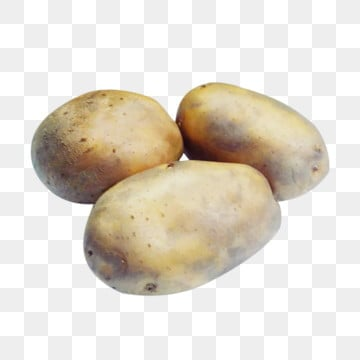Potato Png Images Vector And Psd Files Free Download On Pngtree Pngtree offers potato png and vector images, as well as transparant background potato clipart images and psd files. potato png images vector and psd