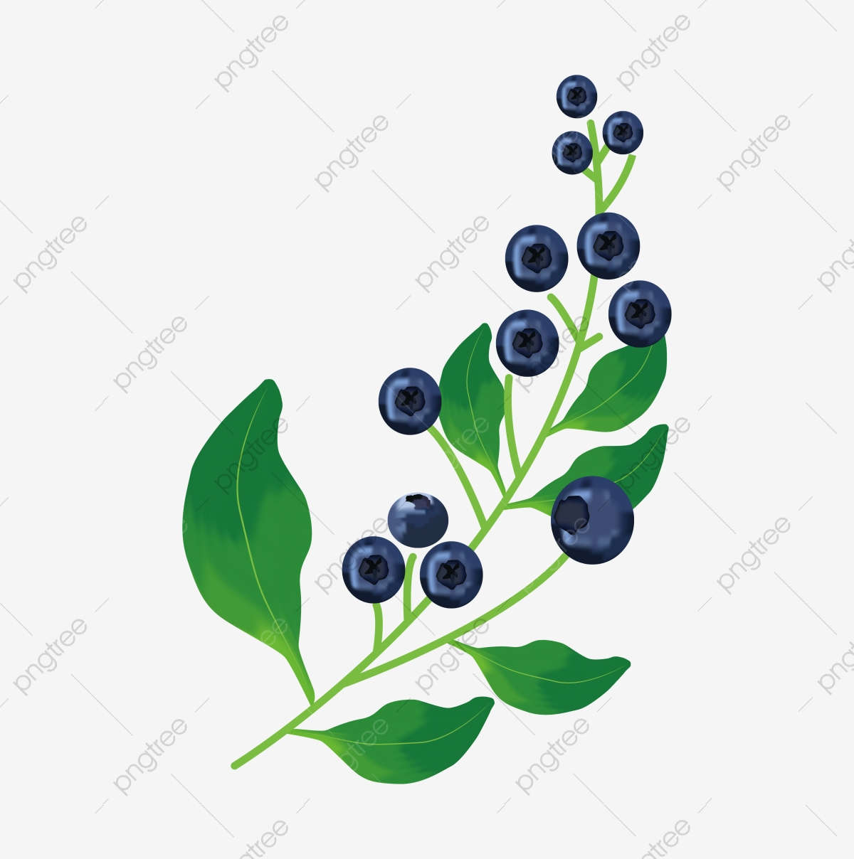 A Blueberry Branch Blue Twig Blueberry Png And Vector With Transparent Background For Free Download