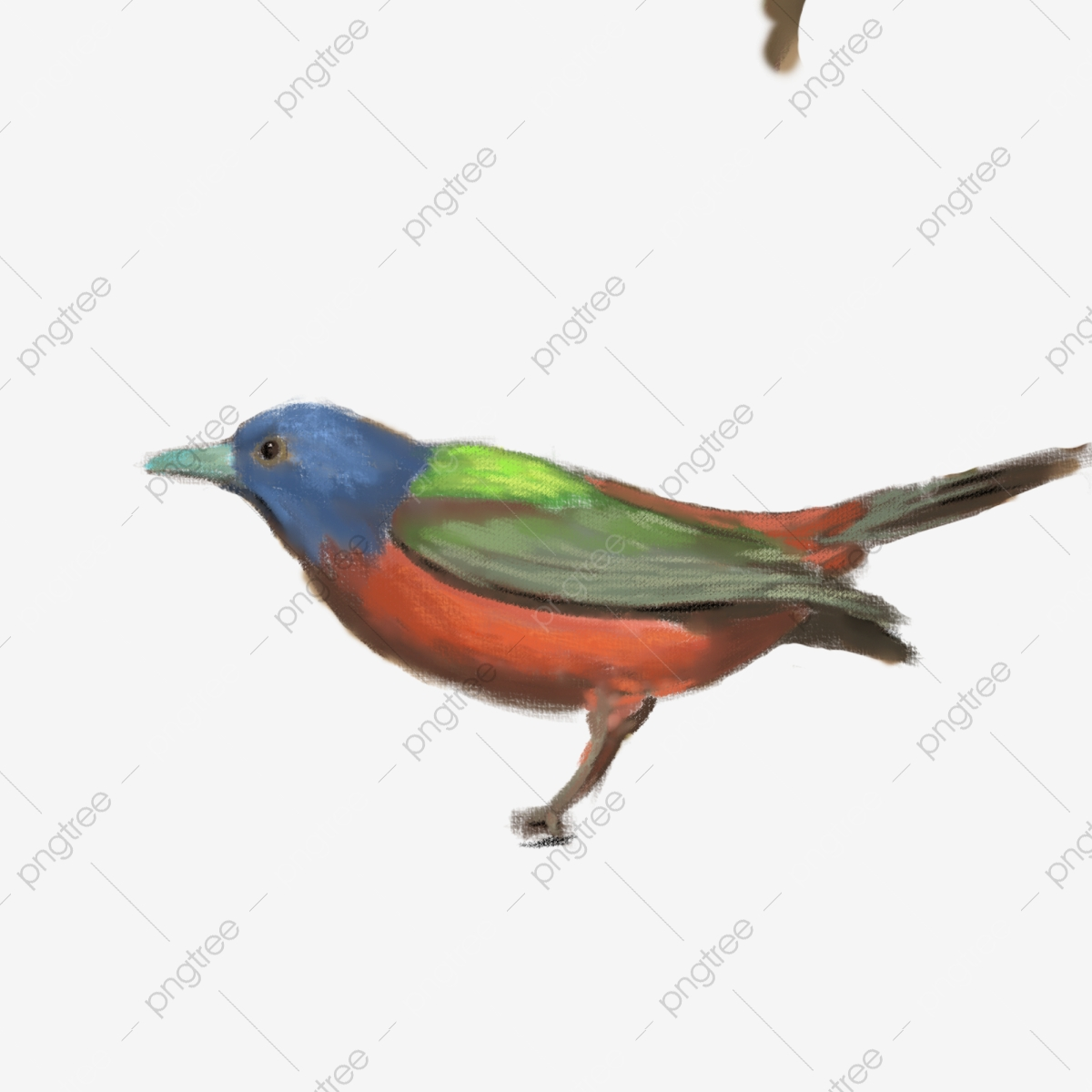 A Cute And Beautiful Bird Little Bird Beautiful Cute Png Transparent Clipart Image And Psd File For Free Download