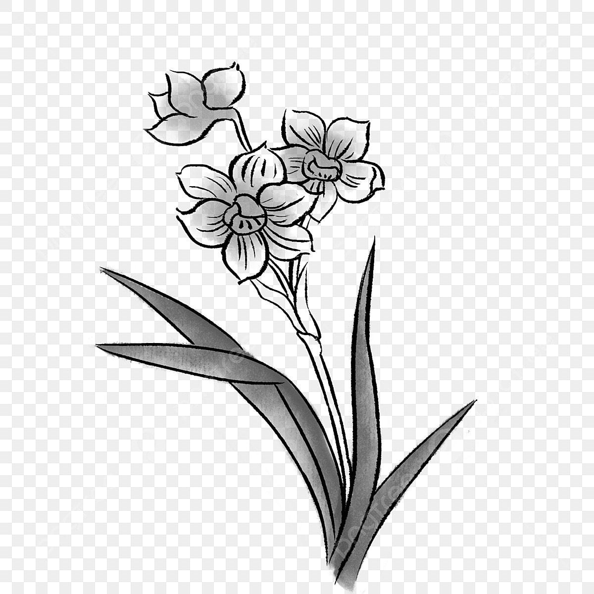 Gambar Orkid Bunga Bunga Anggrek Dakwat Orkid Bunga Sebuah Bunga Png Dan Psd Untuk Muat Turun Percuma
