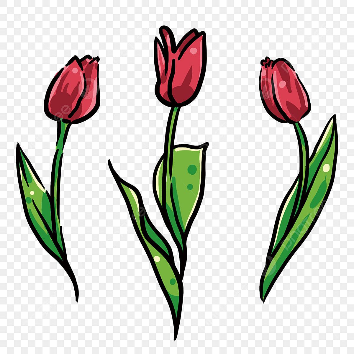 Tulipe Rouge Belles Tulipes Fleurs Rouge Fleurs De Dessins Animes Feuilles Vertes Fichier Png Et Psd Pour Le Telechargement Libre