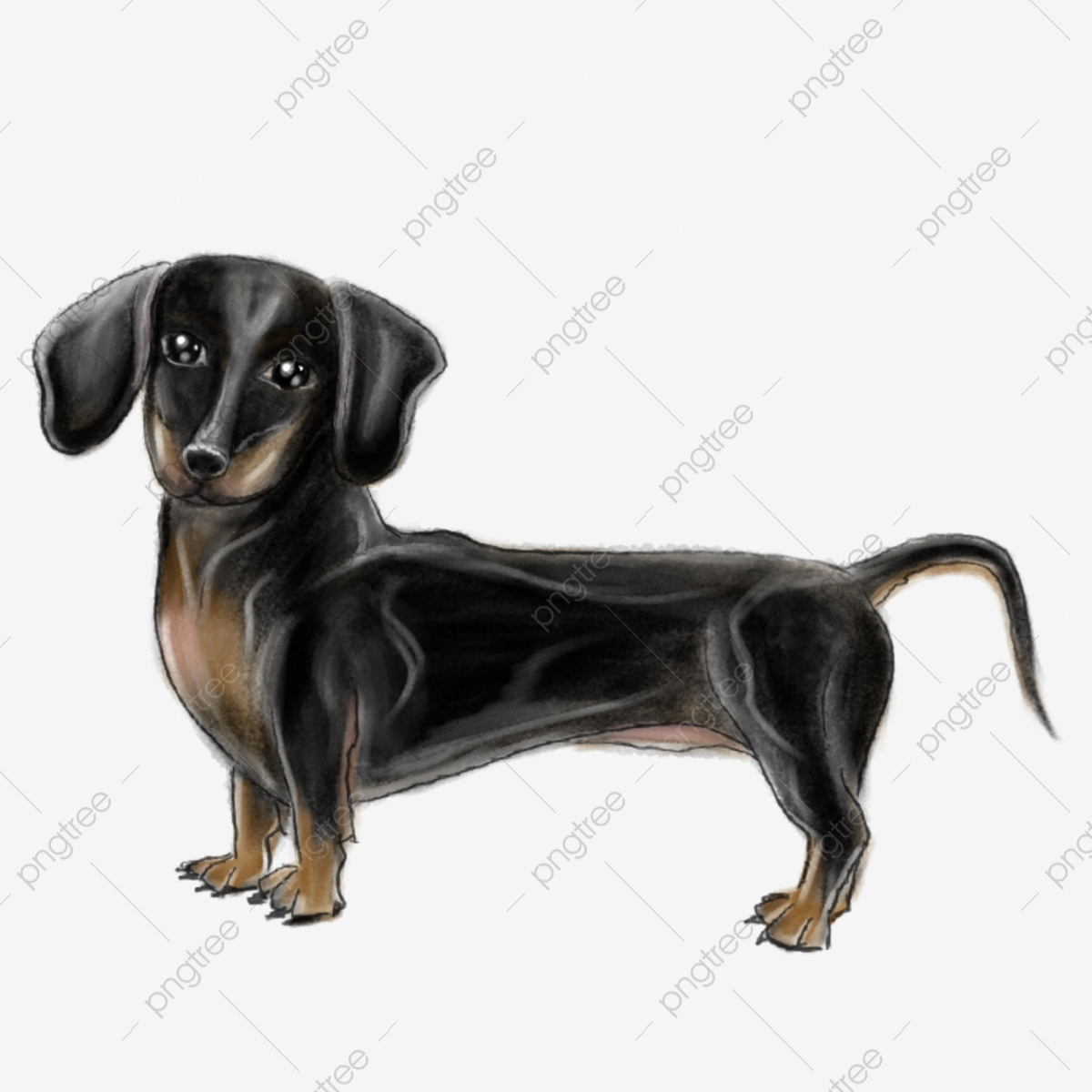 Cartoon Dachshund Puppy Illustration Dachshund Clipart Black Dog Dachshund Png Transparent Clipart Image And Psd File For Free Download