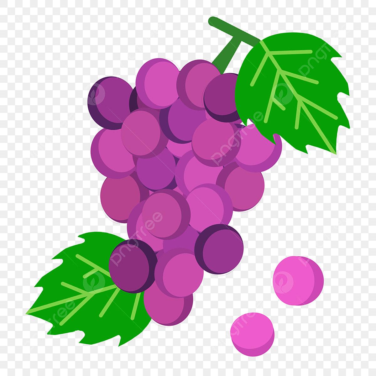 Cartoon Purple Grape, Purple, Grape, Fruit PNG Transparent ...