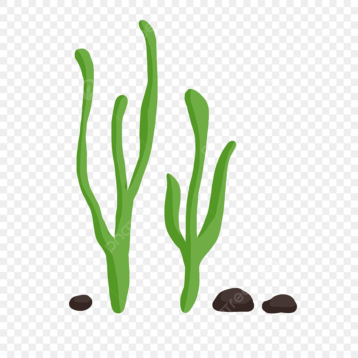 Rumpai Laut Kartun Rumput Air Tumbuh Tumbuhan Terapung Dasar