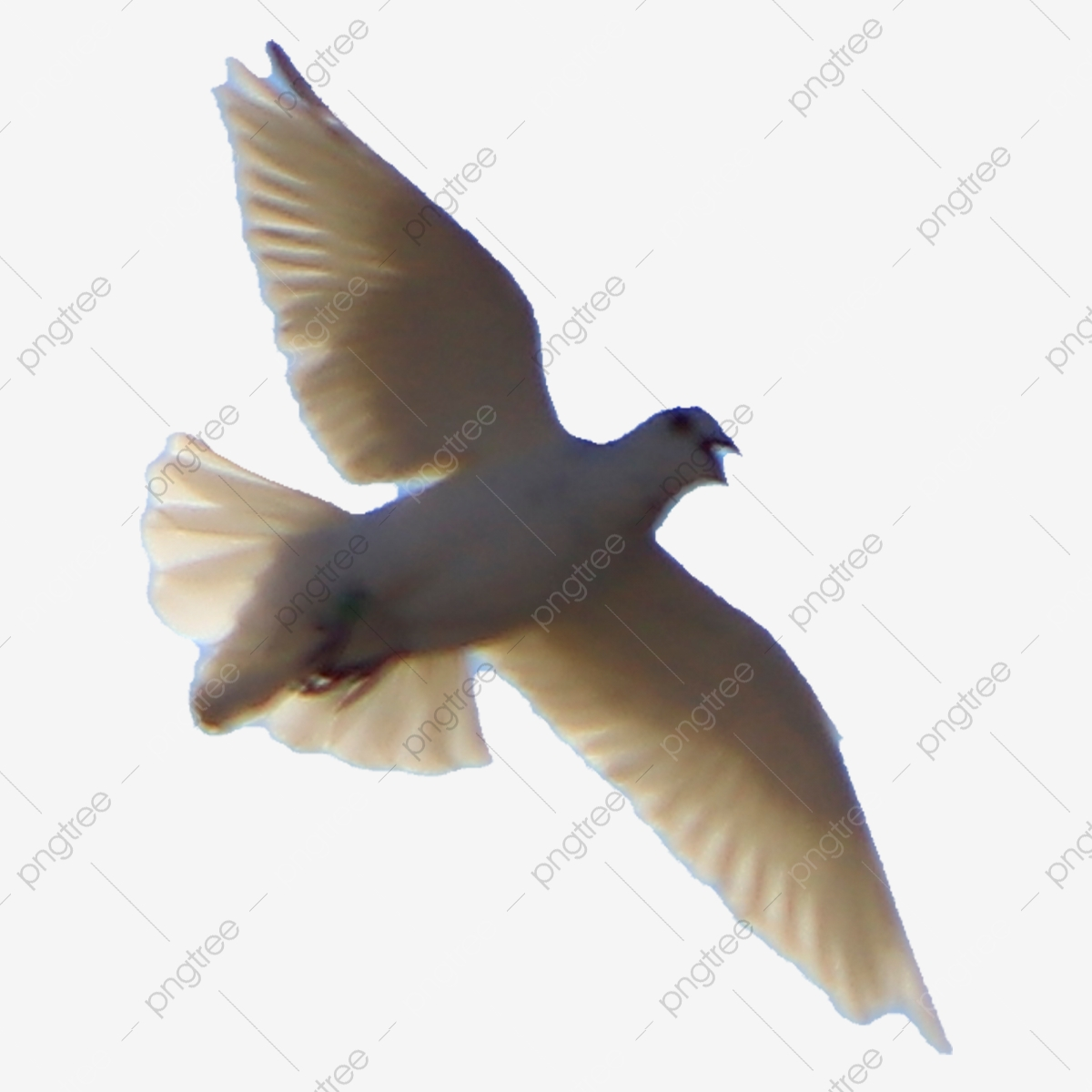 The Holy Ghost Electric Show Gambar Logo Burung Merpati