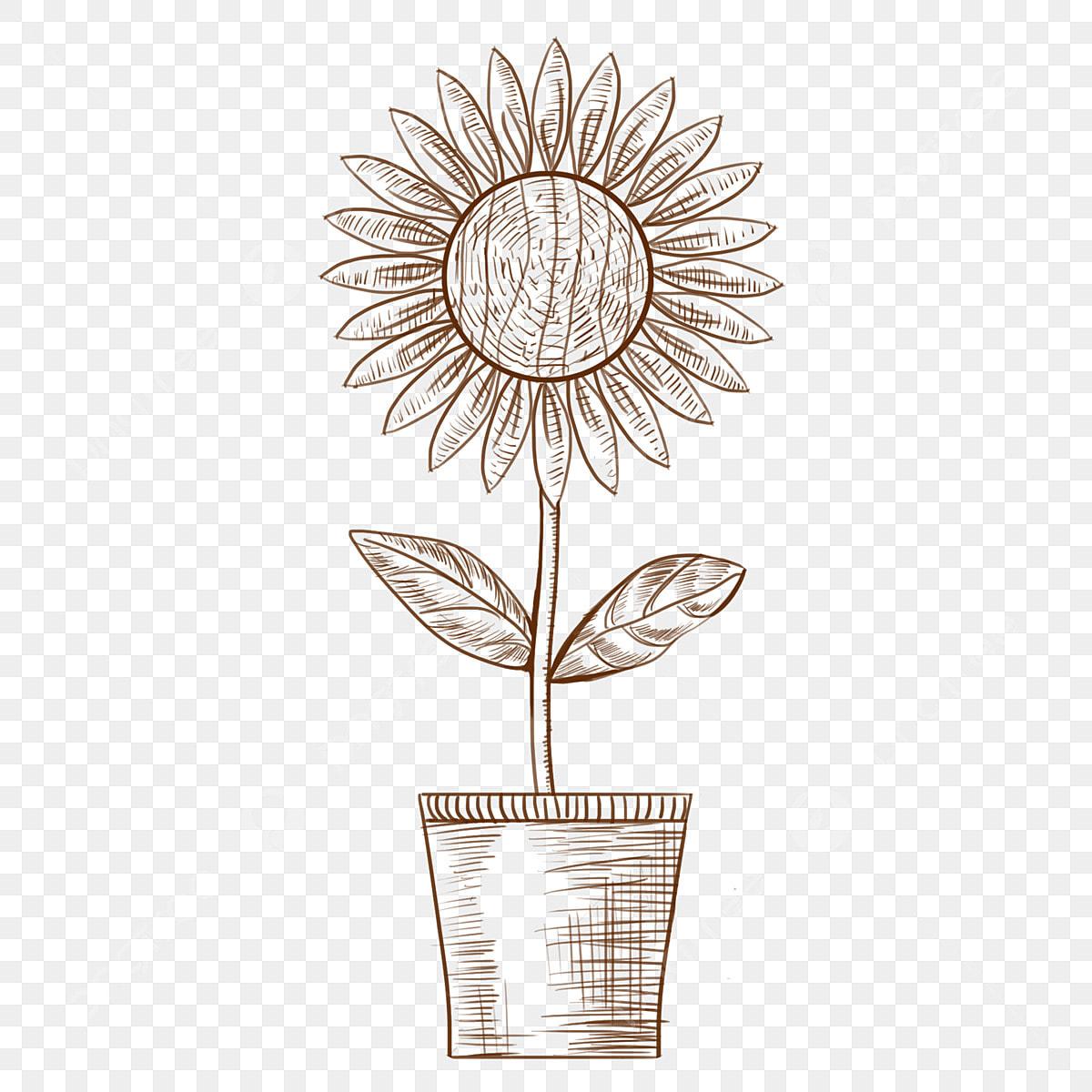 Lukisan Garis Tumbuhan Pasu Bunga Png