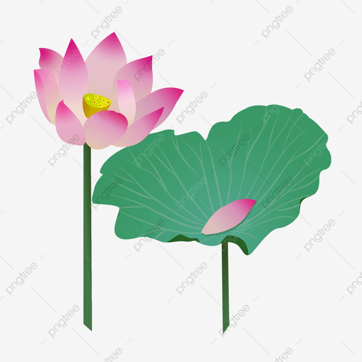 Lotus Flower Cartoon Illustration Flowers Flowers Lotus Png Transparent Clipart Image And Psd File For Free Download