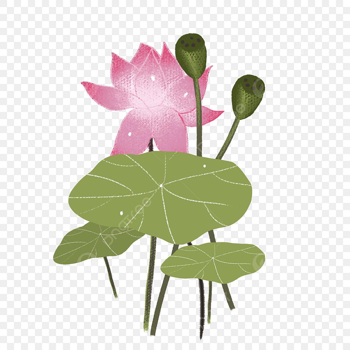 Peint à La Main Couleur Feuille De Lotus Dessin Animé