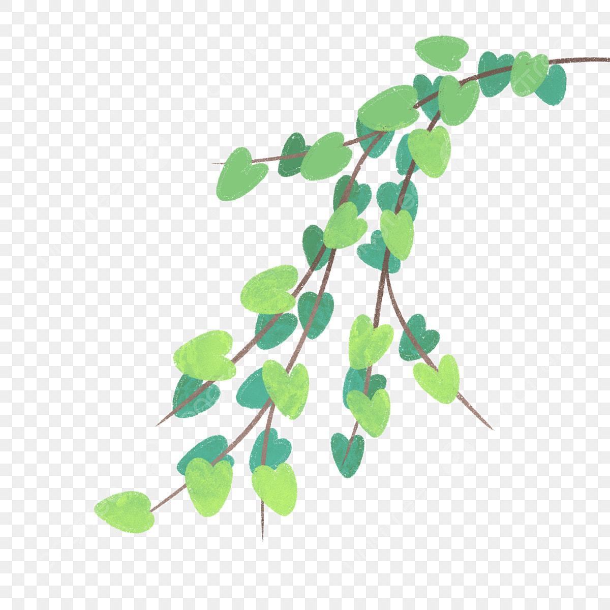 Plante Vigne Vert Feuilles Vigne De Dessin Animé Fichier