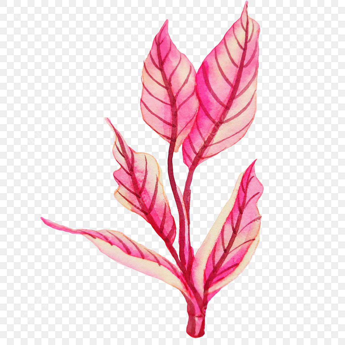 Etoile De Noel Plante Exterieur de plus en plus extérieur tropical plante, plante, extérieur