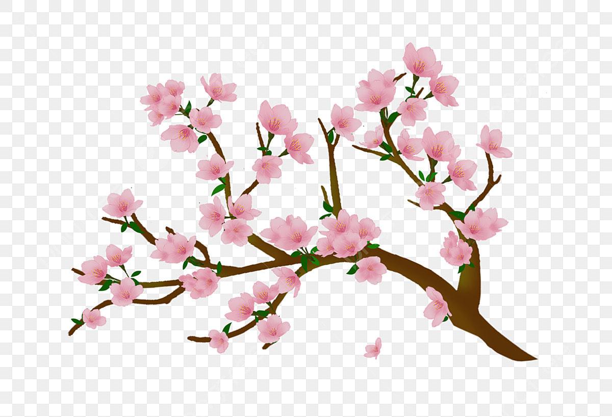 Illustration De Fleur De Cerisier Clipart Fleur De Cerisier Fleur De Cerisier En Fleurs Illustration De Dessin Anime Fichier Png Et Psd Pour Le Telechargement Libre