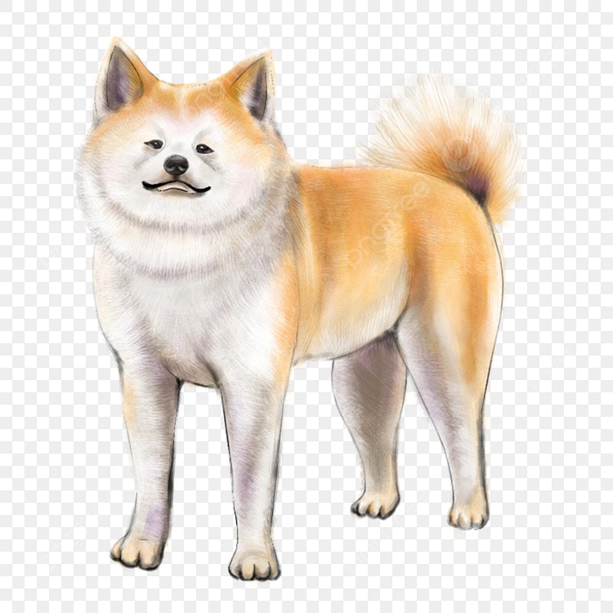Gambar Akita Anjing Jepun Haiwan Ilustrasi Haiwan Akita Ilustrasi Png Dan Psd Untuk Muat Turun Percuma