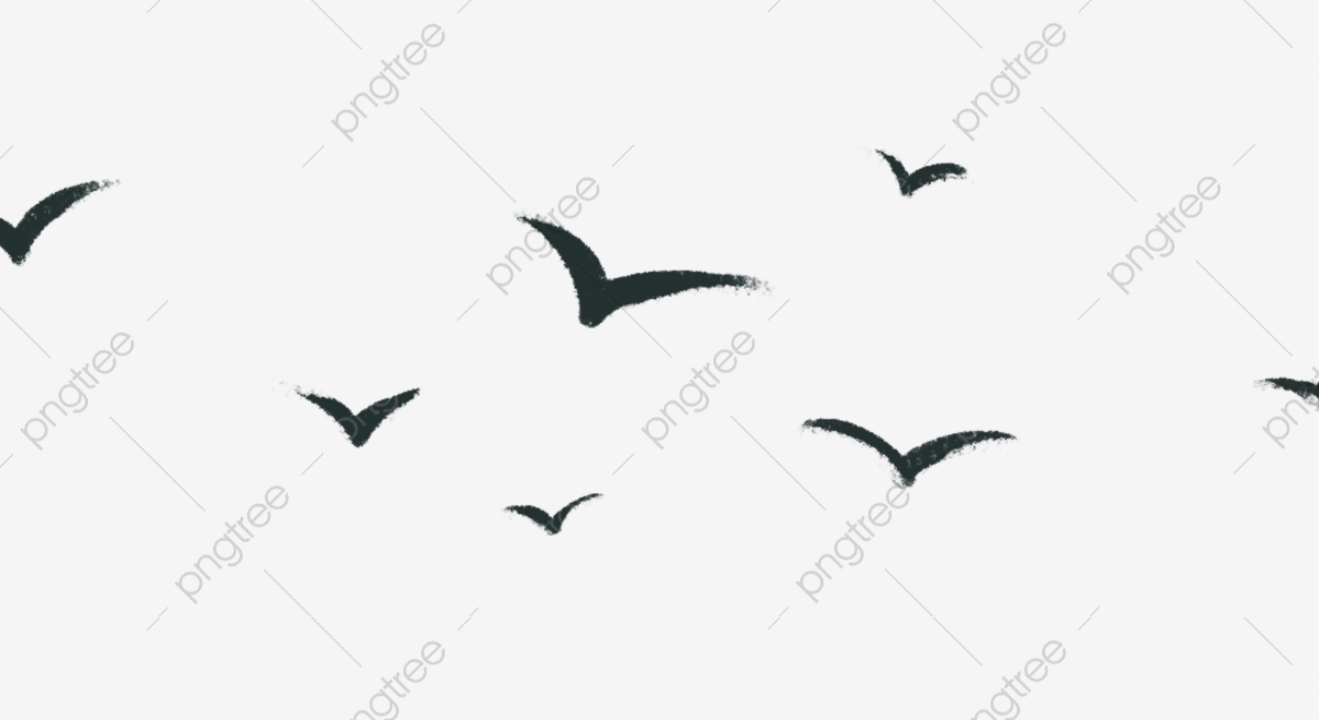تحلق السماء ارتفاع طائر ارتفاع جميل طائر Png وملف Psd للتحميل مجانا