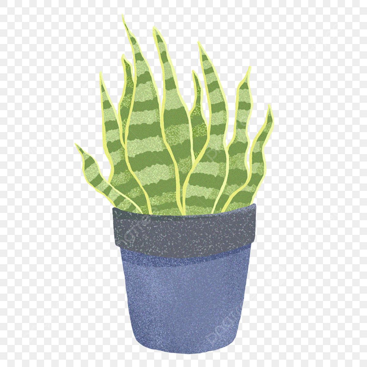 Aloe Plante En Pot Dessin Animé Plante En Pot Bureau Plante