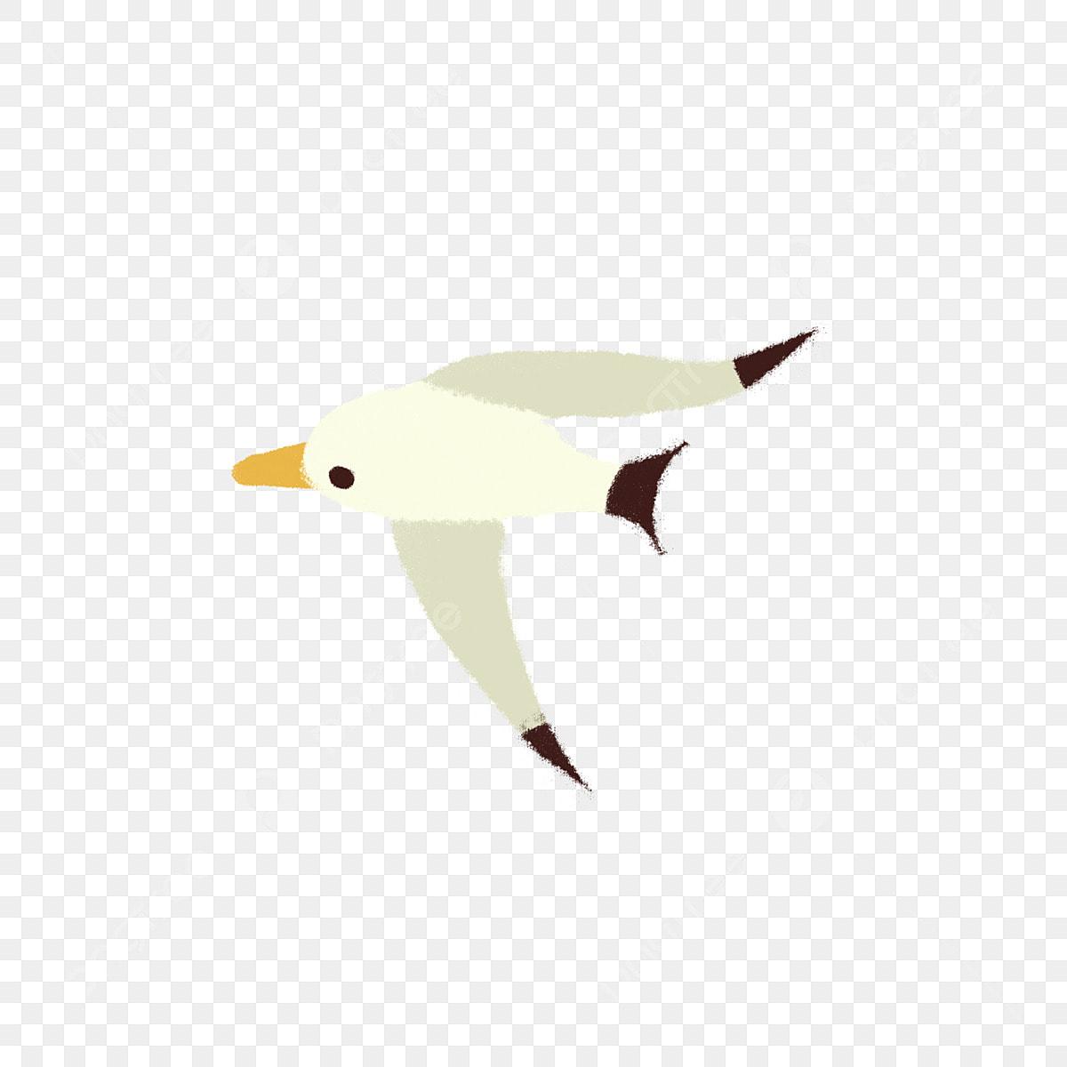 Burung Burung Camar Burung Terbang Haiwan Kartun Muat Muat