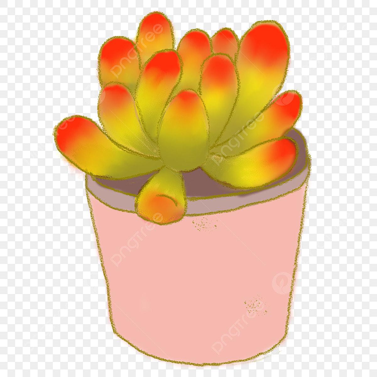 Couleur Fleur Succulente Illustration De Dessin Animé