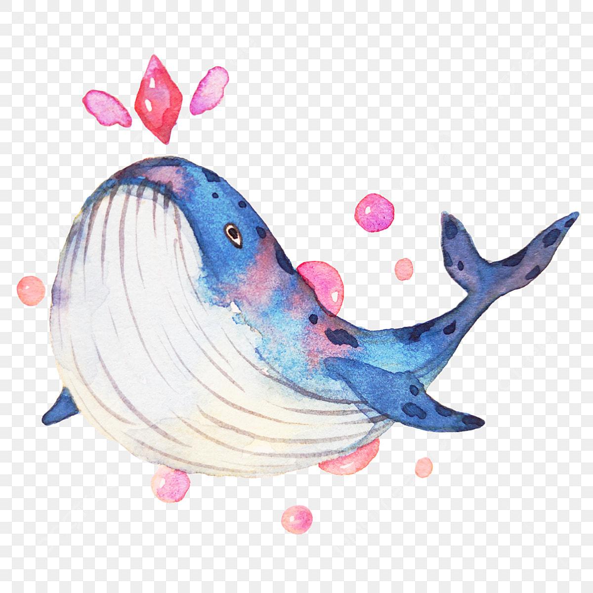 Baleine Bleue Baleine Aimante Illustration De Dessin Anime Illustration De Baleine Dessin Baleine Illustration De Baleine Fichier Png Et Psd Pour Le Telechargement Libre