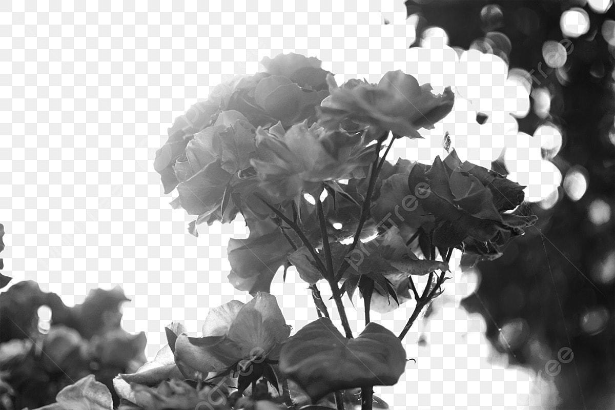 Fleur Fleur Noir Et Blanc Fleur Noir Et Blanc Sombre Fleur