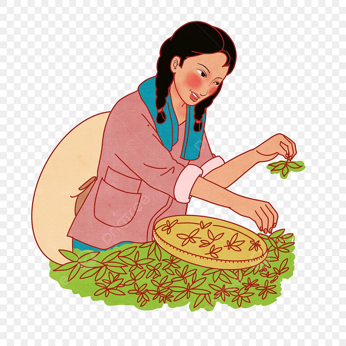 Dia Del Trabajador Mujeres primero de mayo día del trabajo mujeres recogiendo té té